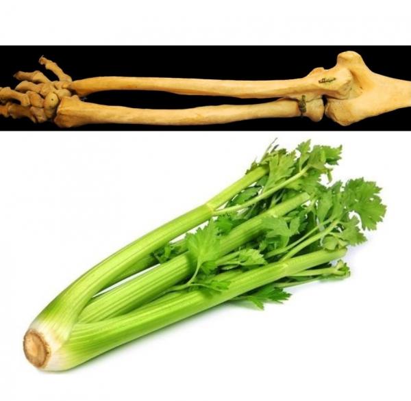 human-bone-celery-600x586