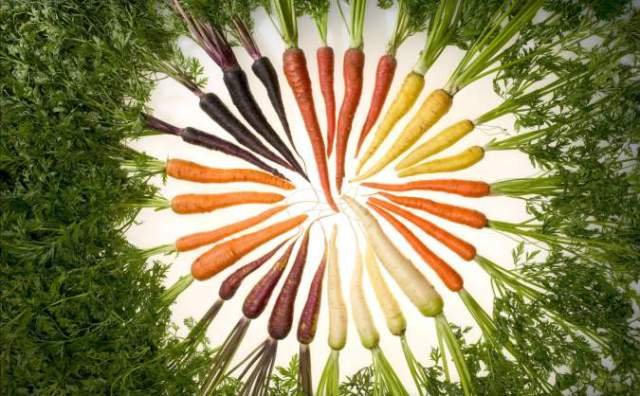 circle-of-carrotssm